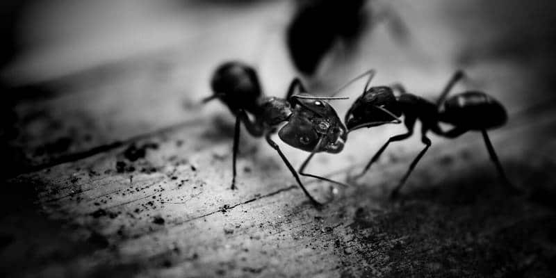 ant control seattle