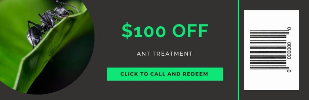 ant treatment coupon
