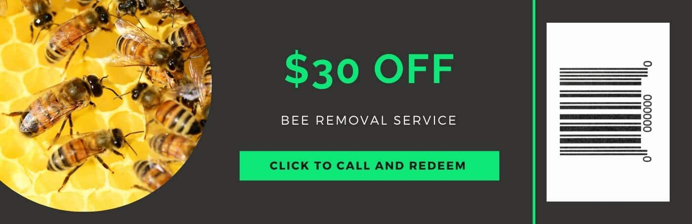 bee removal coupon