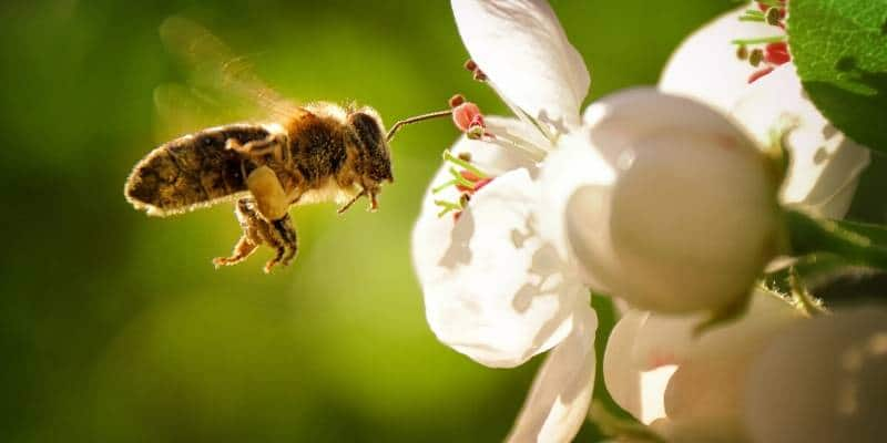 bee removal seattle