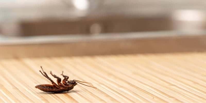 cockroach control seattle
