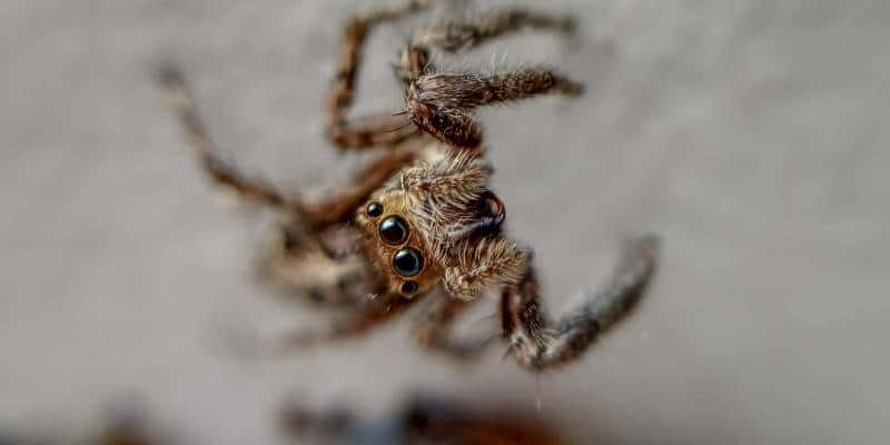 spider control seattle