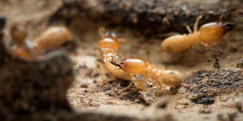 termite exterminator seattle