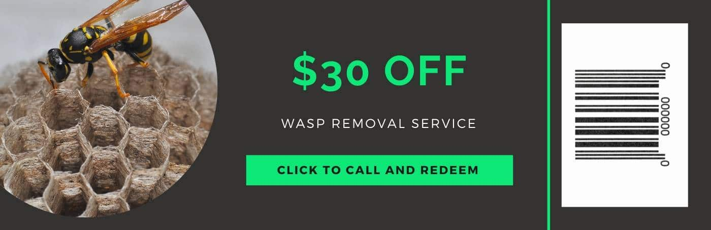 wasp removal coupon