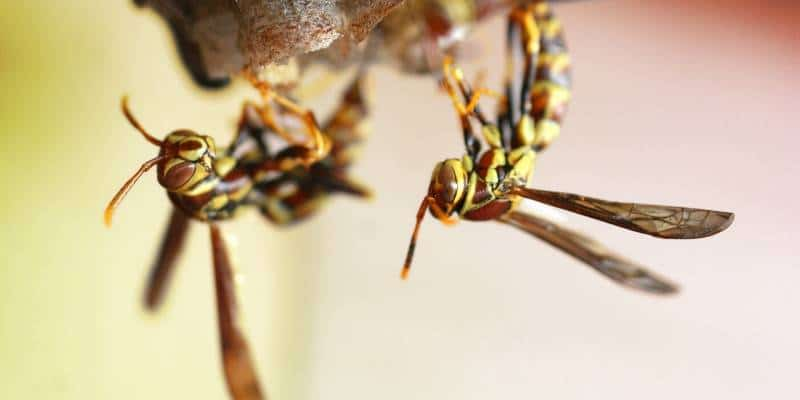 wasp removal seattle